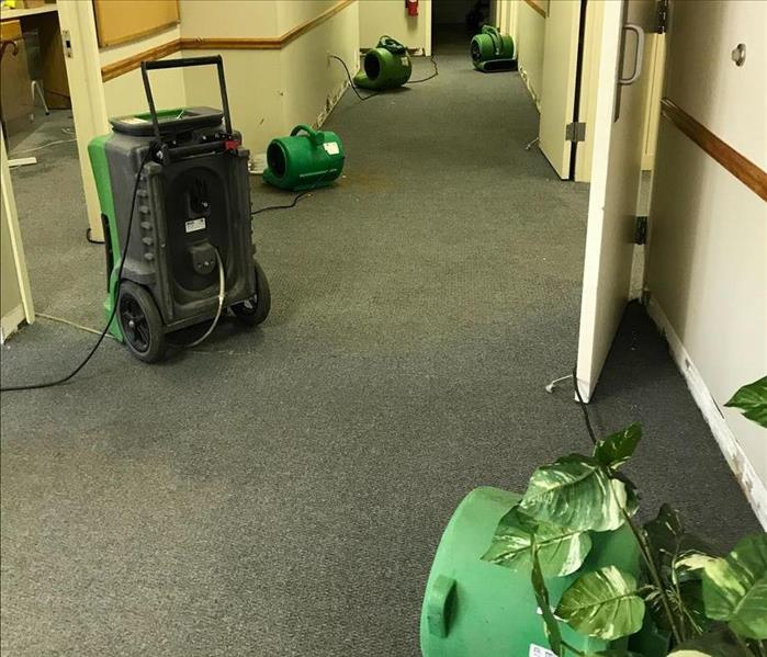 after water has been extracted from the carpet and equipment was set up - carpet clearly dry