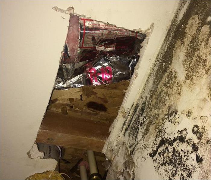 Mold Remediation and Restoration in New Vermom NJ