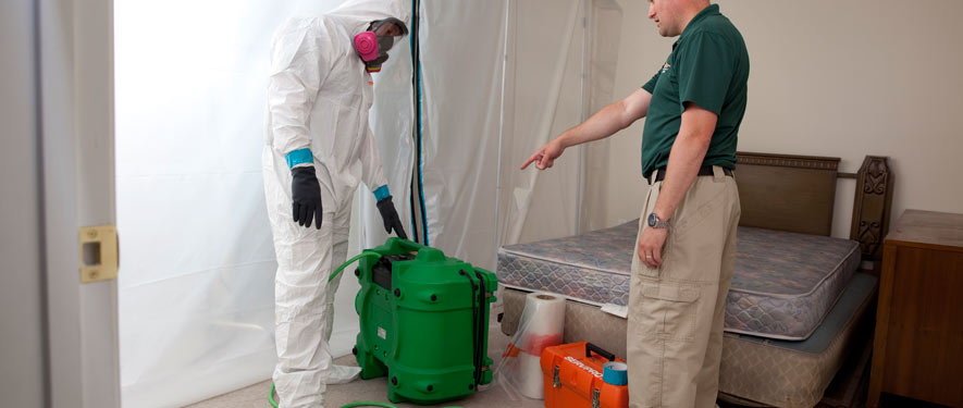 Morristown, NJ mold removal process